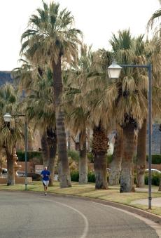 Palm trees along Canyon View Road