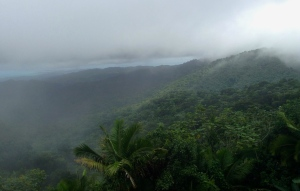 Yunque Rain Forest