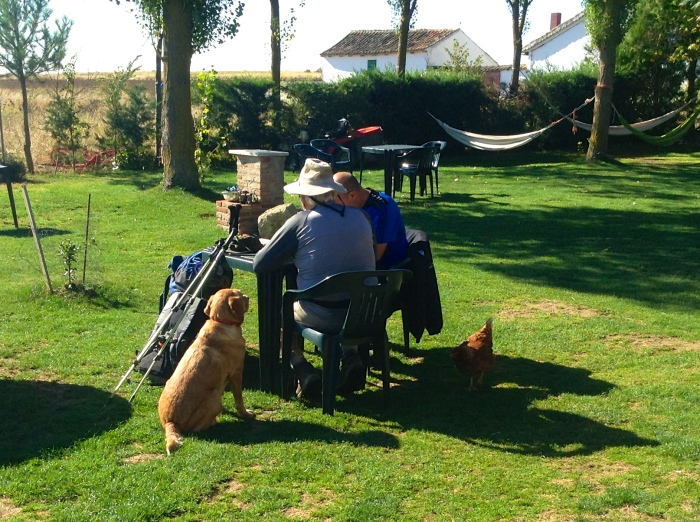 Man and his best friend; and a chicken - Spain