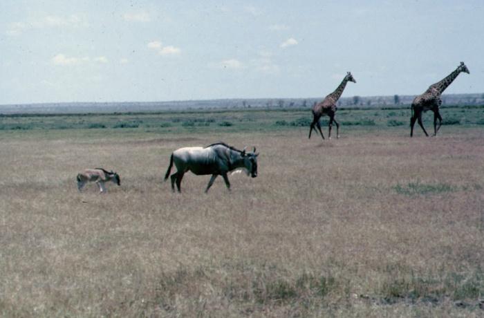 Kenya - H. Webster
