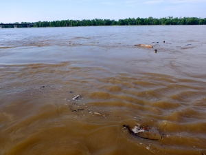 A river of chocolate milk with bits of trees and trash thrown in, the Mississippi
