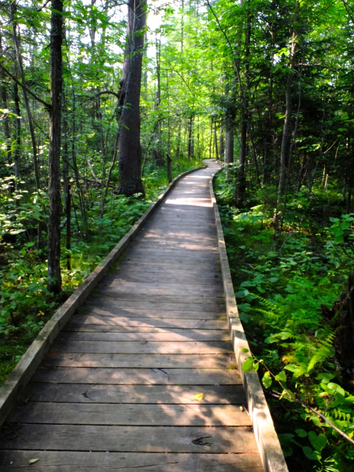 Walking through the woods at Itasca State Park - Minnesota
