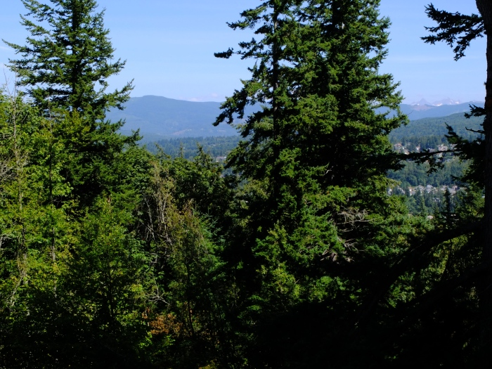 A high point in the Sehome Hill Arboretum - Bellingham WA