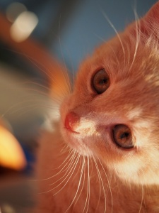 Hi, I'm Sunshine the kitten.