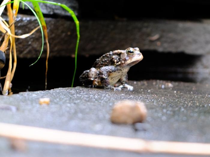 Frog, Norfolk Virginia